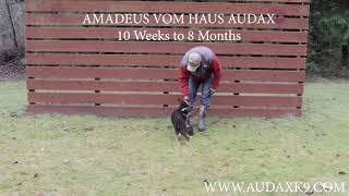 Amadeus Vom Haus Audax early work
