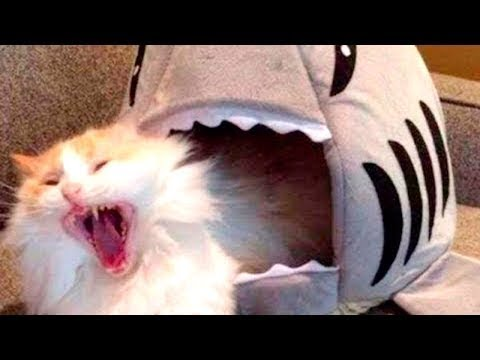 Cats-best pranks with cats and cats of cats video