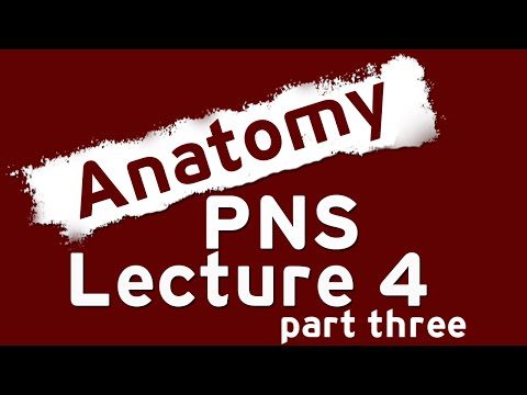 Spinal nerves - Part 3 (to the end of lumbar plexus)