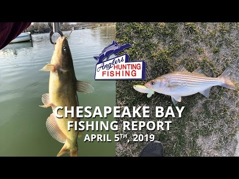 Chesapeake Bay Fishing Report - April 5th, 2019