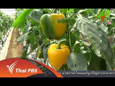 ทุกทิศทั่วไทย  : พริกหยวกหวาน ที่โครงการหลวงปังค่า จ.พะเยา (12 ธ.ค.57) [HD]