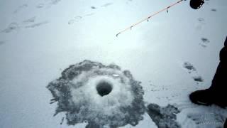 Ловля окуней зимой со льда на балансиры. Береславка..