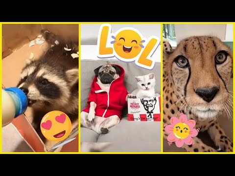 Funny Cute Cats And Dogs 😻🤣🐶Try Not To Laugh - Funny Pet Animals Life