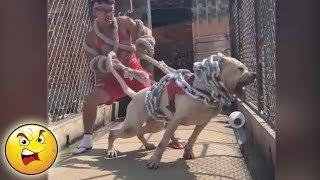 L KE A BOSS 41 ✅ S.T.O.P   GYM With Fierce Dogs