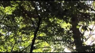Castle Howard Woodland Garden - Ray Wood