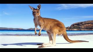 Sander van Doorn & Julian Jordan - Kangaroo (Original Mix) HD + Download link