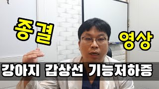 강아지 갑상선 기능저하증 종결 영상