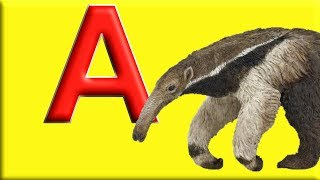 Letter A - Alphabet Animals with Animal Names & Animal Sounds