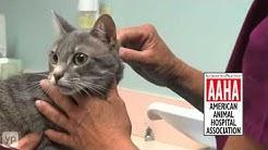 All Animal Clinic   Veterinarians   Orange Park, FL