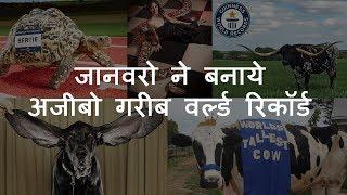 जानवरो ने बनाये अजीबो गरीब वर्ल्ड रिकॉर्ड   Amazing World Records of Animals   Chotu Nai
