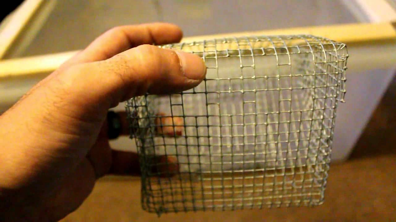mouse cages youtube