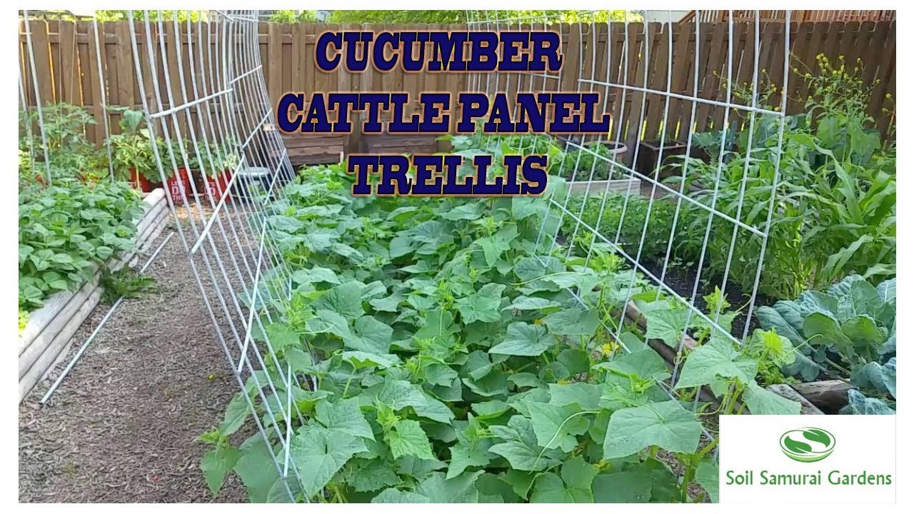 use to trellises secure ties of outdoors pvc zip trestle a tos how tops together garden diy trellis gardening build