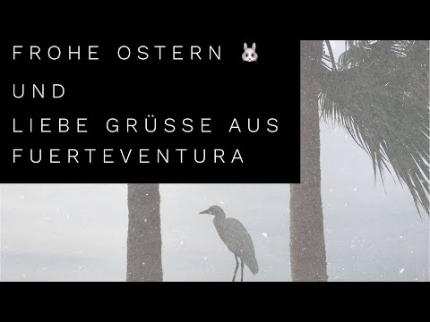Frohe Ostern 🐰 und liebe Grüße aus Fuerteventura 🌴 |IT'S JENNIZ
