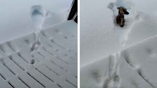 Dog Regrets Jumping Into 40Inches Of Snow