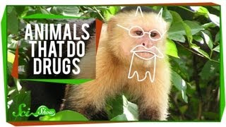 Animals That Do Drugs
