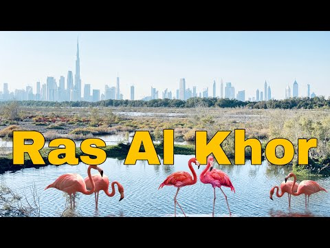 FLAMINGOS IN DUBAI | RAS AL KHOR WILDLIFE SANCTUARY | UAE ADVENTURE