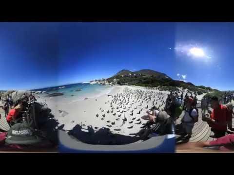 Video 360: la colonia di pinguini di Simon's Town