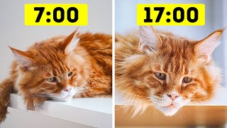 26 Too Common Mistakes Pet Owners Keep Making