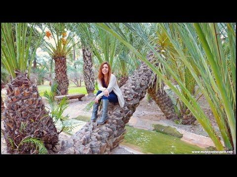 ¿Qué Ver Y Visitar 1 Día En Elche? | Alicante, España
