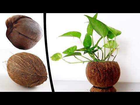 Money Plant Room Décor |How to Reuse Waste Coconut Shell |DIY Marble Money Plant Coconut Shell Ideas