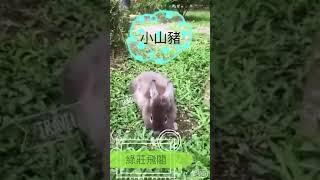 綠莊飛閣渡假會館(可愛動物影片)