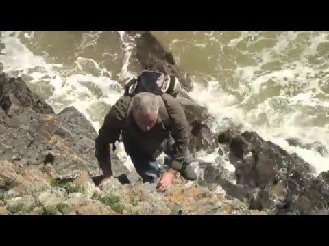 Trailer for Pan fried Sea Bass, Rock Samphire & Sea Beet
