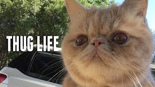 George The Cat Thug Life Pug Smack - Official George2legs