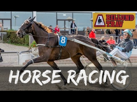 Horse Racing at Billund Trav Race Course