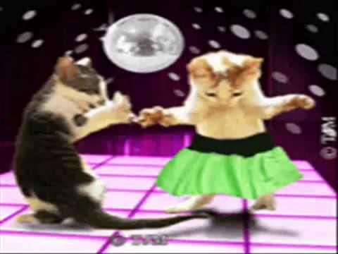 carte anniversaire chat qui chante HAPPY BIRTHDAY CHAT DANCE §§§ Lamice Reem   YouTube
