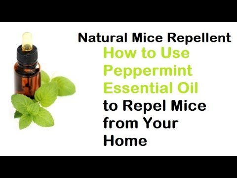Natural Mice Repellent: How To Use Peppermint Essential Oil To Repel Mice From Your Home