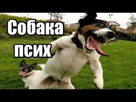 Моя собака псих. Как успокоить нервную собаку? Собака боится пылесоса что делать.