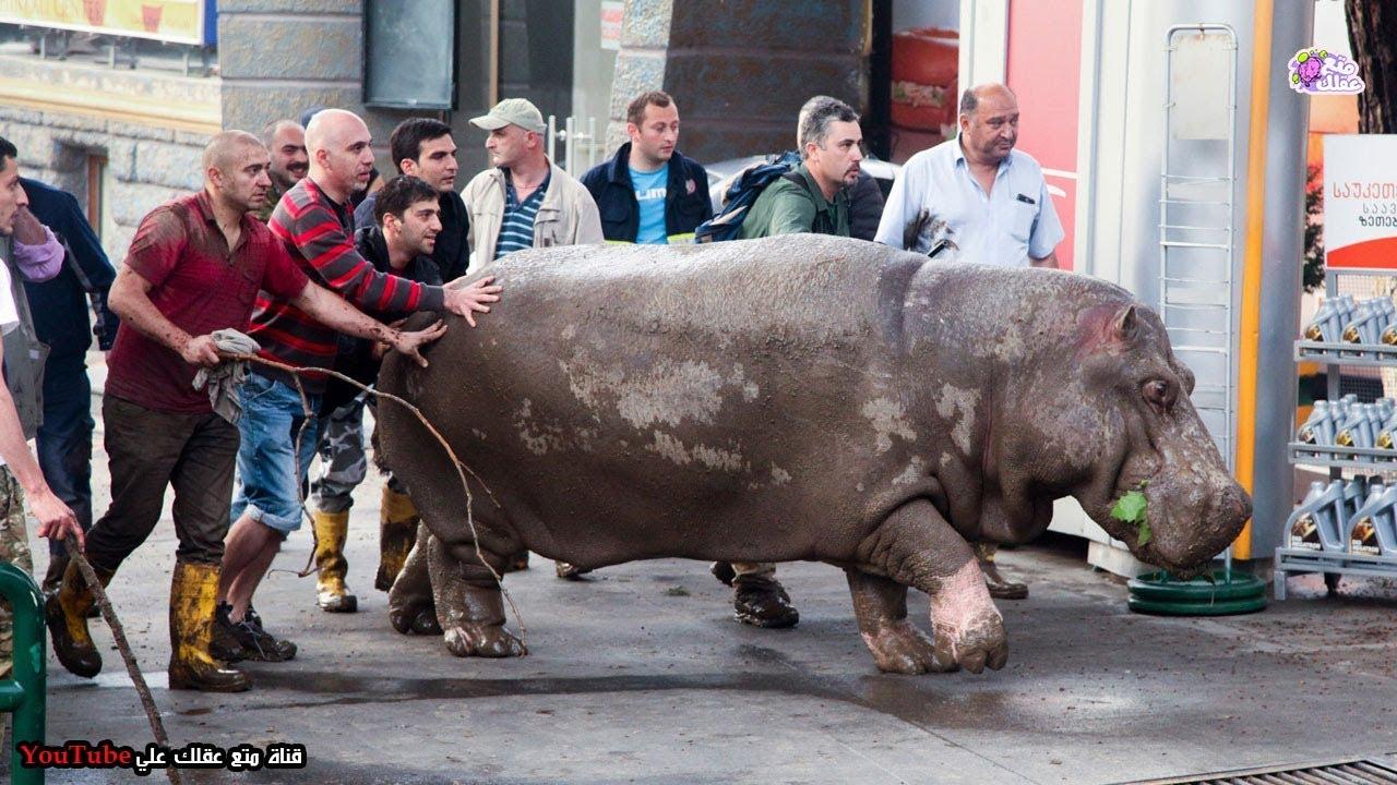أغرب 10 حالات هروب قامت بها حيوانات من حديقة الحيوان !