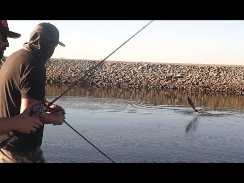 How To Catch King Salmon Casting Lures! California Delta