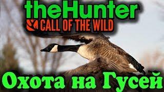 Охота на дикого гуся - theHunter: Call of the Wild обновление Wild Goose