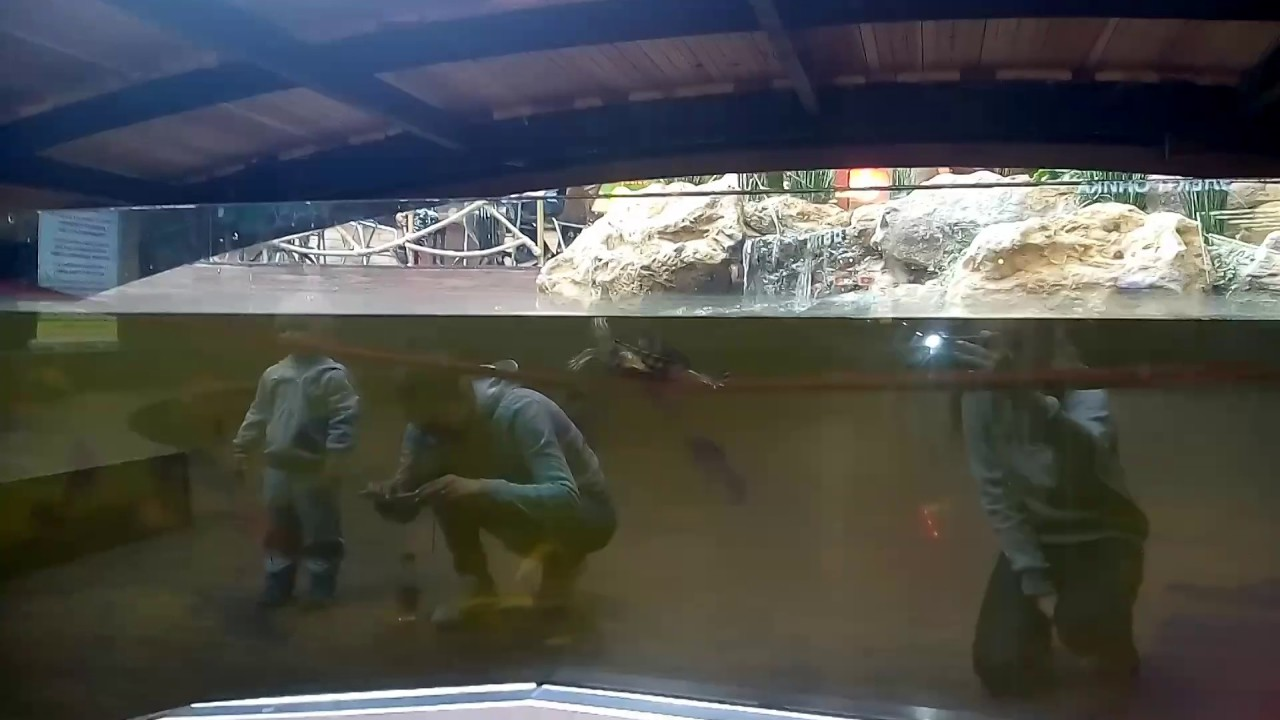 Живой песок купить в Саратове - YouTube