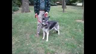 Delilah Good Dog Rescue