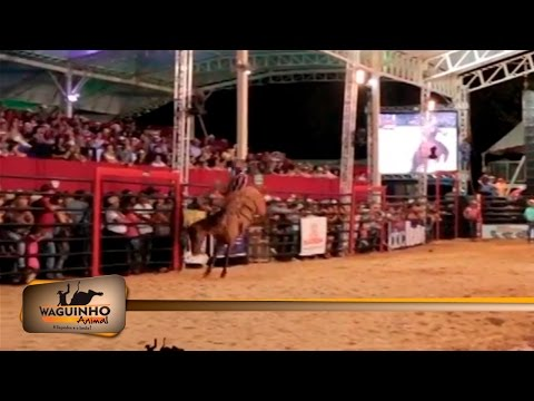Waguinho Animal - Montarias em Rodeio de Ouro Verde 25/03/17