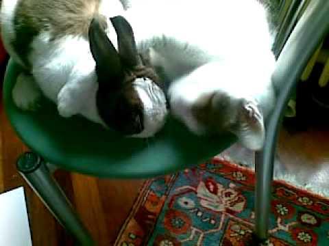 Gatto ama coniglio youtube - Boom gemelli diversi ...