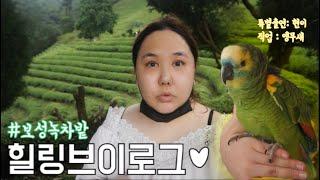 힐링브이로그♥원조보성녹…
