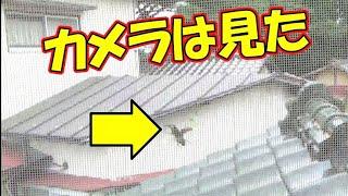 【カメラは見た】ノコギリ飛来の決定的瞬間!
