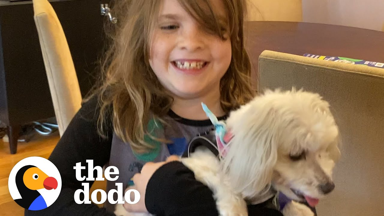 She's Allergic To Dogs — Watch Her Dad Find Her The Perfect Rescue Pup! | The Dodo Adoption Day