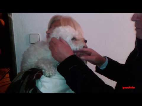 Dog Reaction To Family Coming Home After a Long Time | Dog Welcoming Family Home