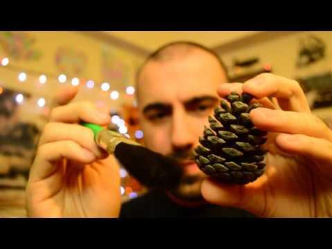 ASMR Pine Cone Cleaning / Brushing 🌲