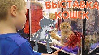 ТОП Выставки Кошек =^.^= Привет Куки из SlivkiShow Смешные Кошки, Котята, Коты Мейн-кун! Funny Cats