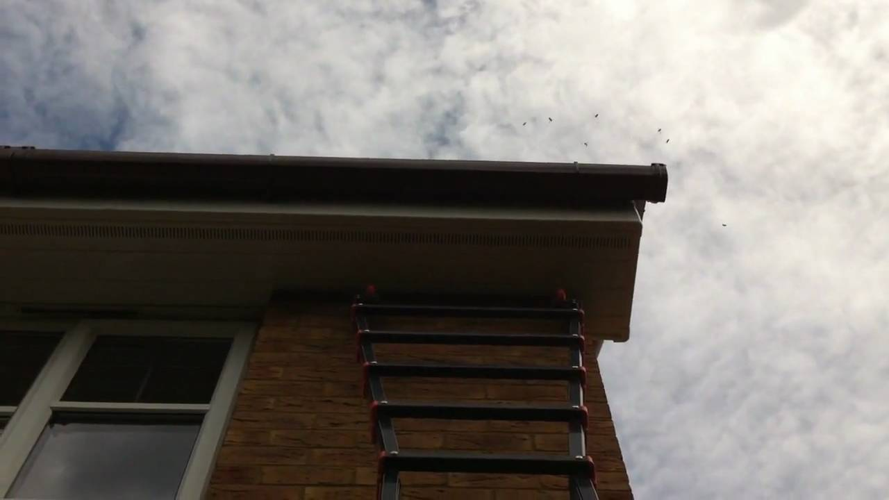 Berkshire Wasp Control How We Treat A Nest Under Roof Tile You