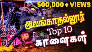 Top 10 காளைகள் அலங்காநல்லூர் ஜல்லிக்கட்டு | நின்று விளையாடிய காளைகள் | Alanganallur Jallikattu