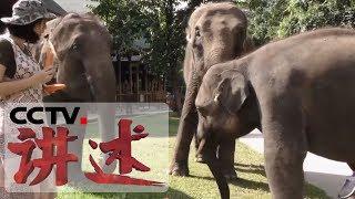 《讲述》 系列节目《我奋斗·我幸福》 雨林精灵(下):小象的野外驯化之路充满挑战 20190428 | CCTV科教