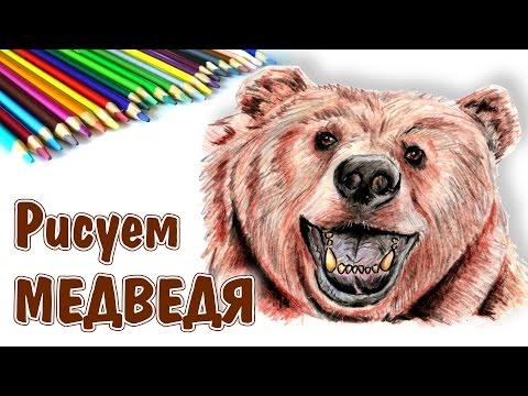 КАК НАРИСОВАТЬ МЕДВЕДЯ. How to draw a bear