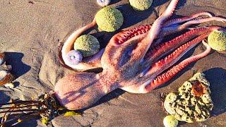 Что произошло на Камчатке Ядовитый океан Причины загрязнение воды Экологическая катастрофа и Бесы