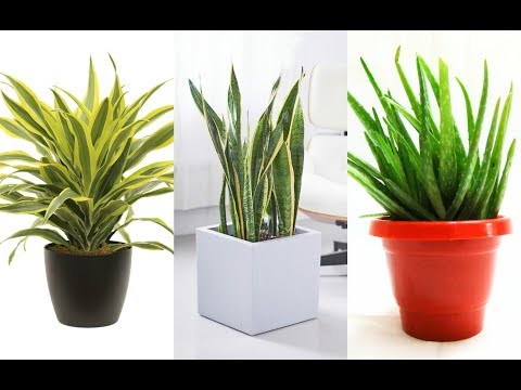 12-indoor-plants-that-you-can-grow-in-your-house-right-now!